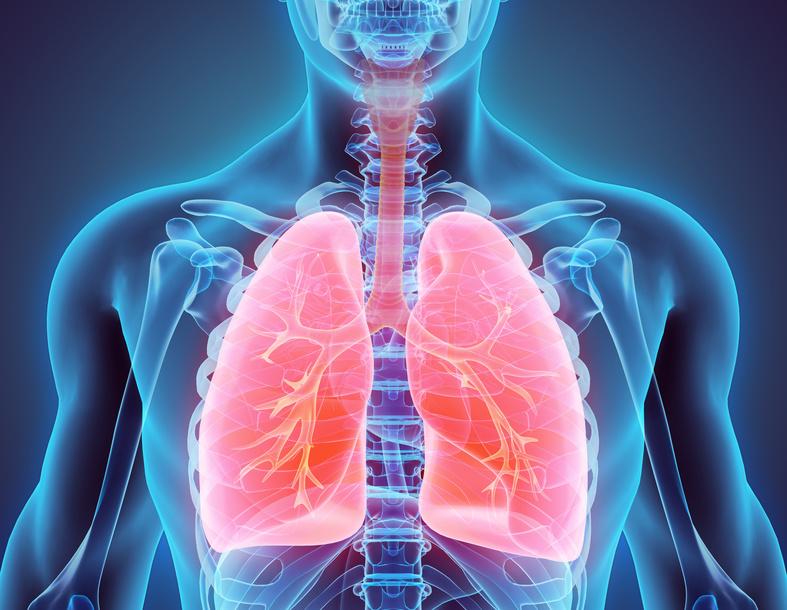 Lunge_Zentrum_der_Atmung