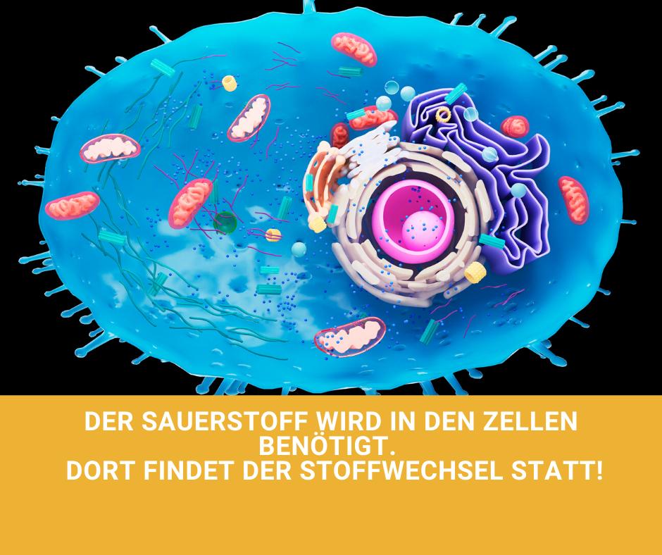 Sauerstoff_Zelle_Stoffwechsel